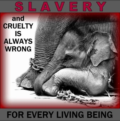 cruelty in zoos and circuses If you believe that the use of animals in circuses is cruel, here are 5 ways to do something about it.